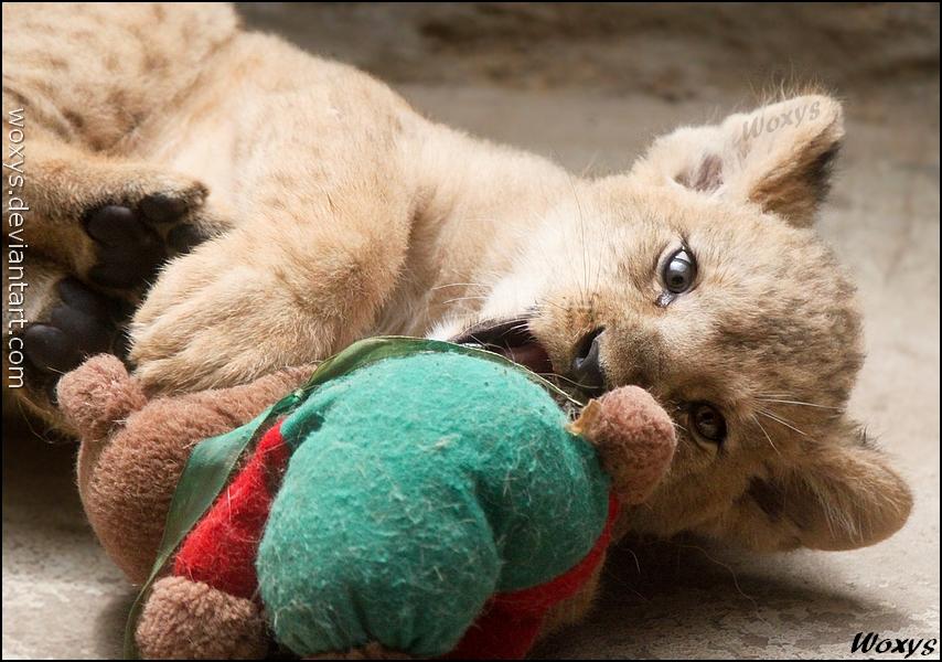 Kill, kill, kill the teddy! by woxys