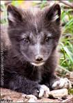 Baby fox :-)