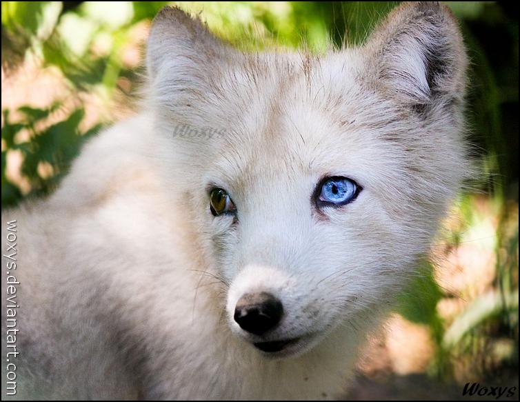 Sapphire eye by woxys