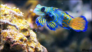 A Parrot of the Sea