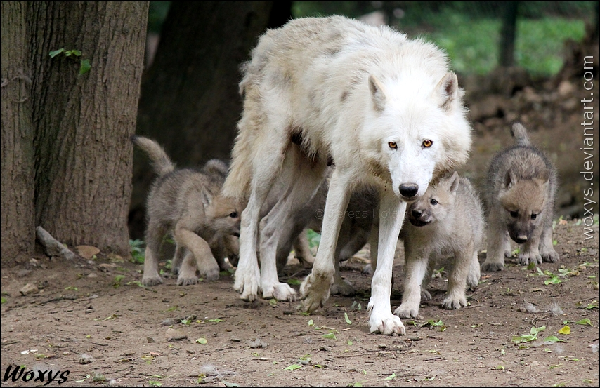 Lead the big pack, mommy!