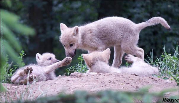 Lick my paw!