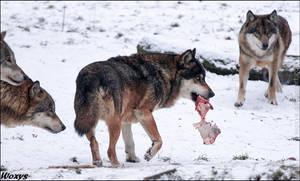 The alpha eats first
