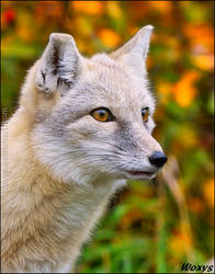 This fox is on fireeeeee! by woxys