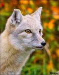 This fox is on fireeeeee!