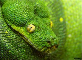 Green, greener the greenest