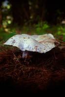 The Blue Mushroom by KWilliamsPhoto
