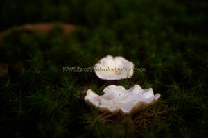Buttons in the Moss by KWilliamsPhoto