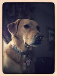Sadie Sue Shagbottom - Watching Television by KWilliamsPhoto