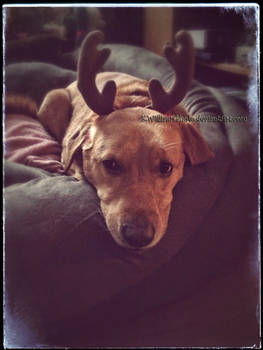 Sadie Sue Shagbottom and the Antler Incident