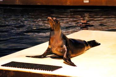 Sea Lion 9