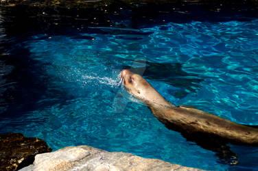 Sea Lion 12