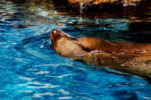 Sea Lion 14