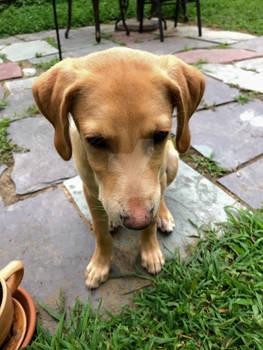 Fionn as a Puppy