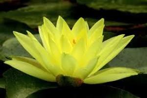 pmmadhusha's Profile Picture
