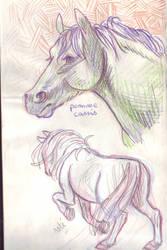 sketches : horses