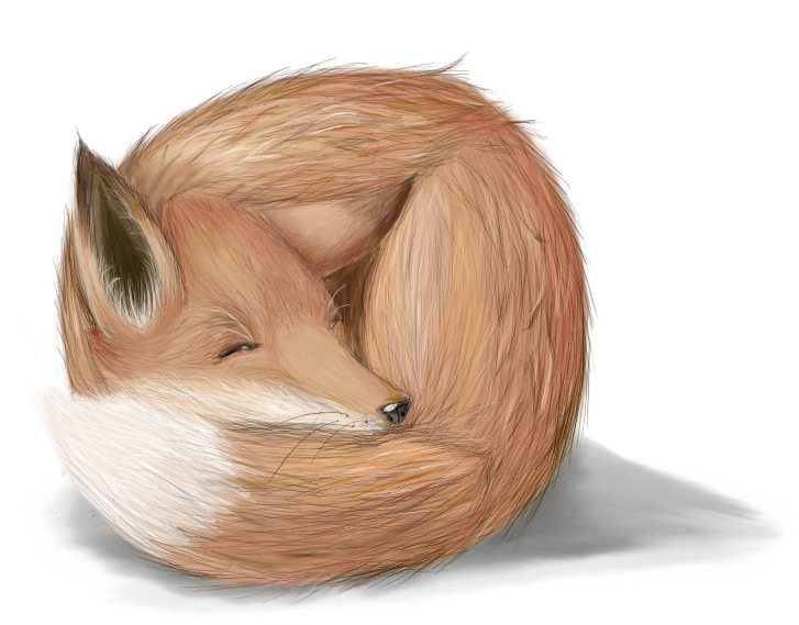 how to draw a realistic fox head