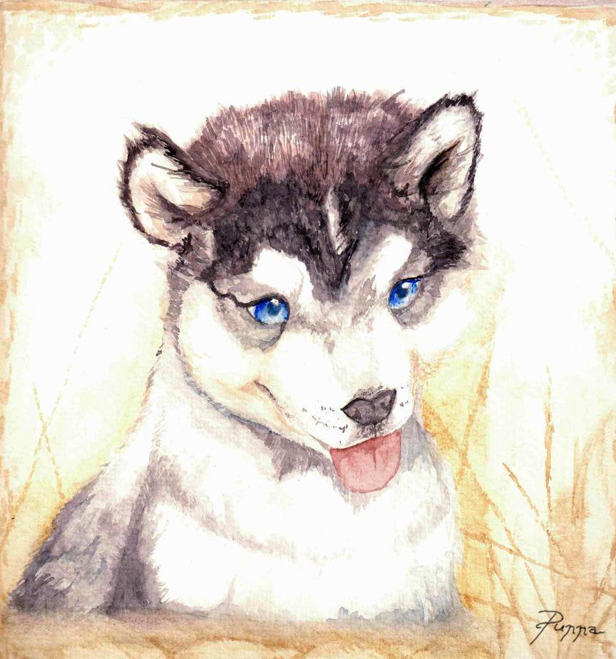 Cute Husky Puppy by PsunnaCute Husky Puppy Drawings