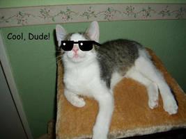 Cool Cat XD