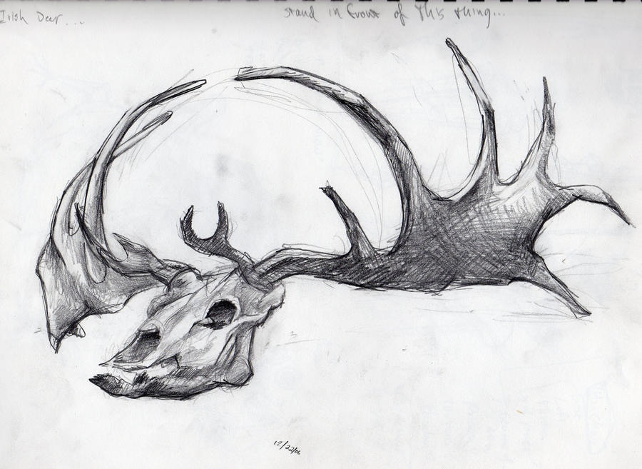 Elk skull drawing - photo#11