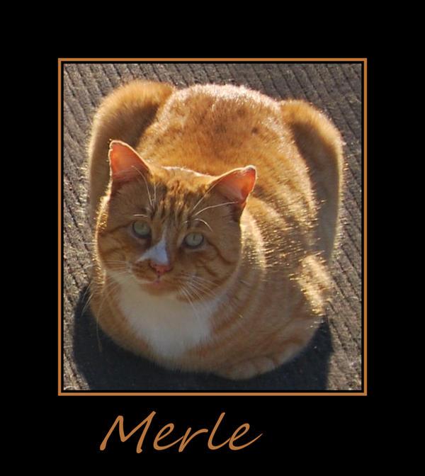 Meet Merle... by LadyAliceofOz