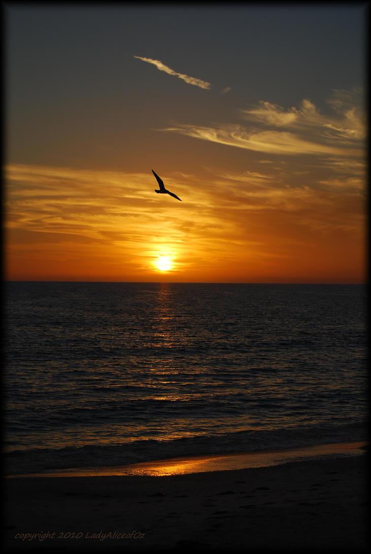 Soaring at Sunset... by LadyAliceofOz