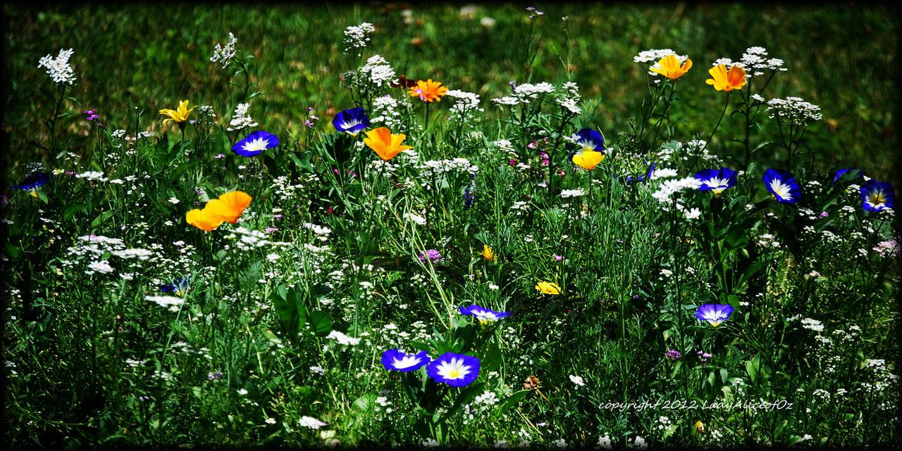 Summer Love From Romania... by LadyAliceofOz