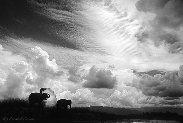 Chitwan Monsoon by LindelCaine