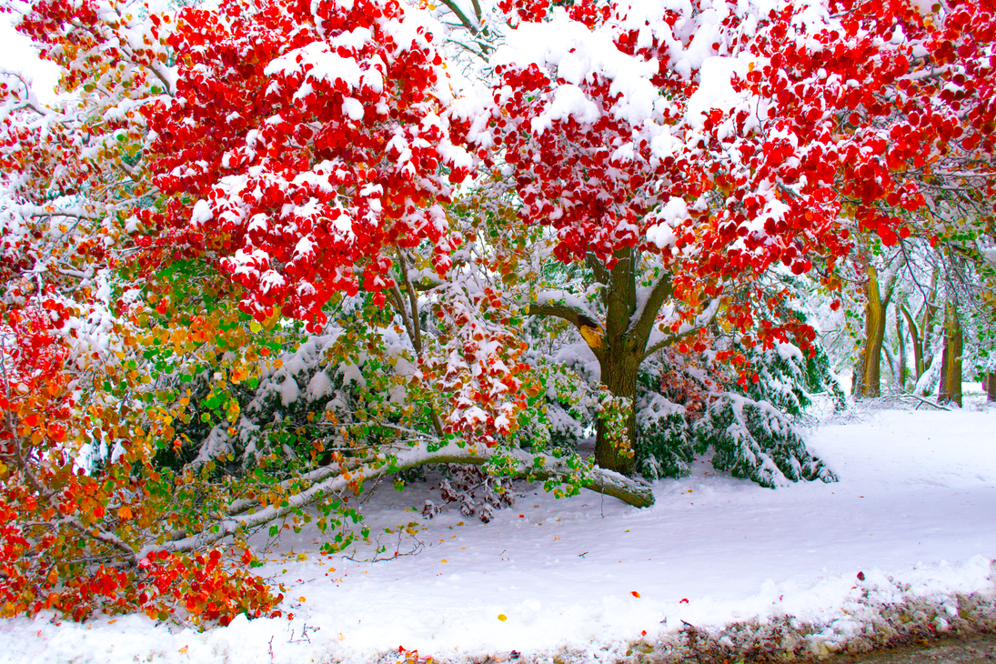 Autumn and Winter Collide #2 by Hearte42