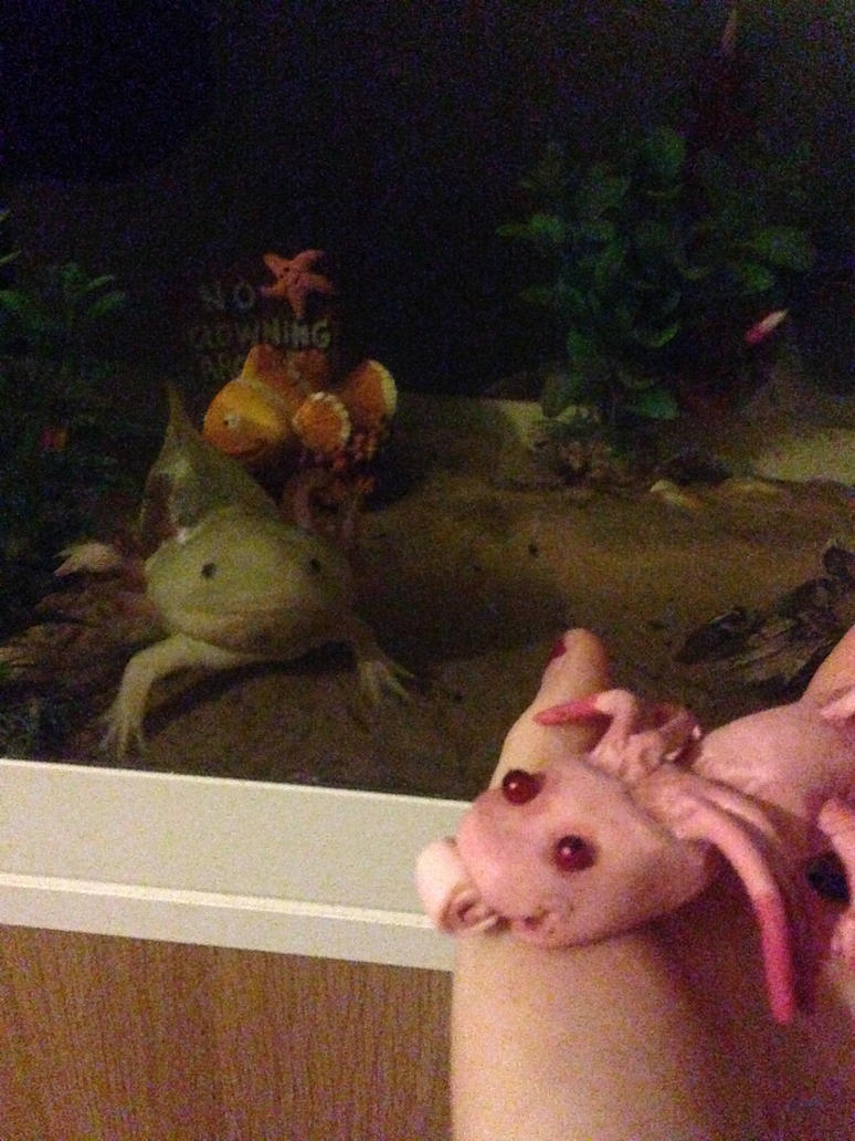 Axolotl by Itchywitchygirl