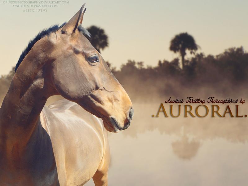 Auroral thoroughbreds 2