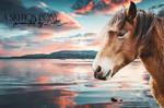 Skyros Pony by LostCause