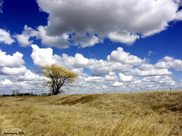 Lone Prairie by jojomercury