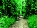 Castlewood Path