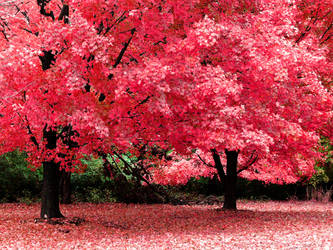 Autumn Fantasy by jojomercury