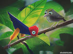 If we lose the rainforest, we lose this weird bird