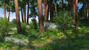 Pine Grove (Img03)