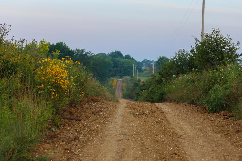 Country Roads 3 by zamfir