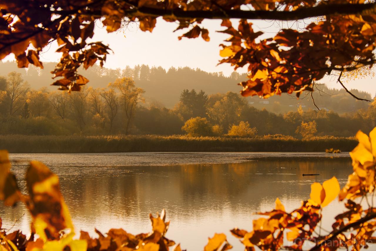 Golden Autumn by fotomanisch