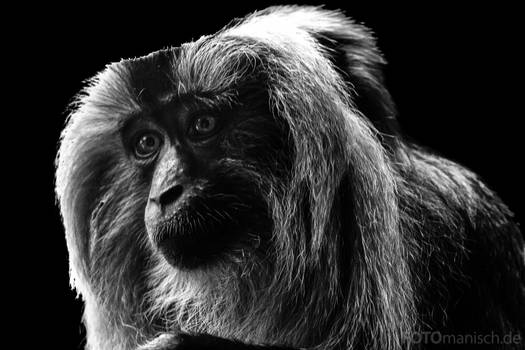 Low Key Animal Portrait