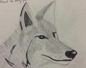 outgoingcoyote's Profile Picture