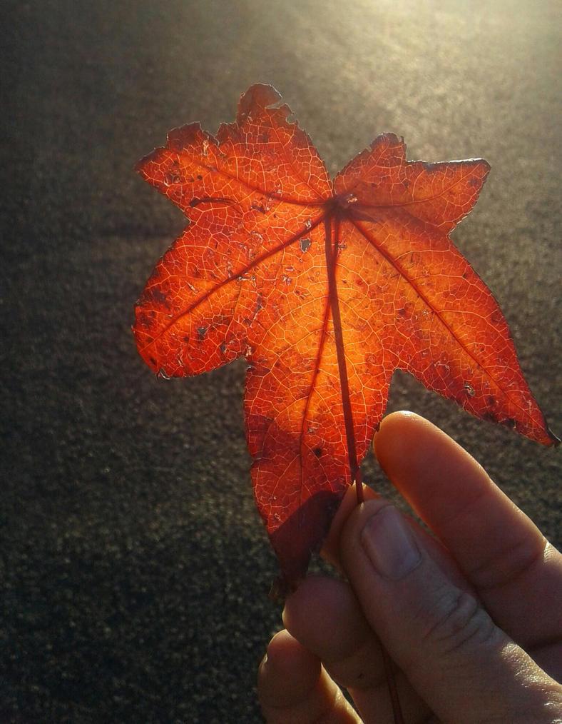 Last day of Autumn  by DeusExStigmachina