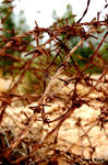 Barbed wire 2