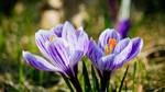 Flower by Lasiu7