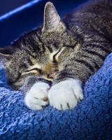 Sleepy Cat by Lasiu7