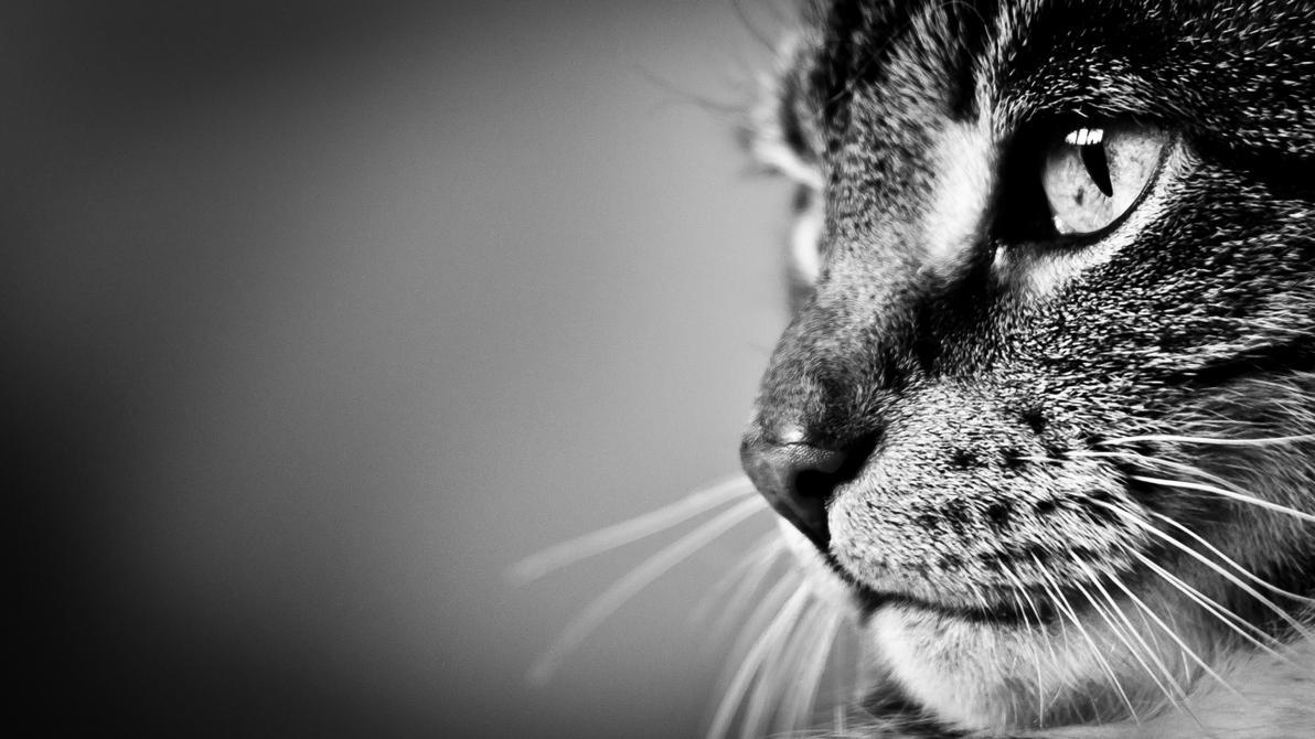 Cat.... by Lasiu7