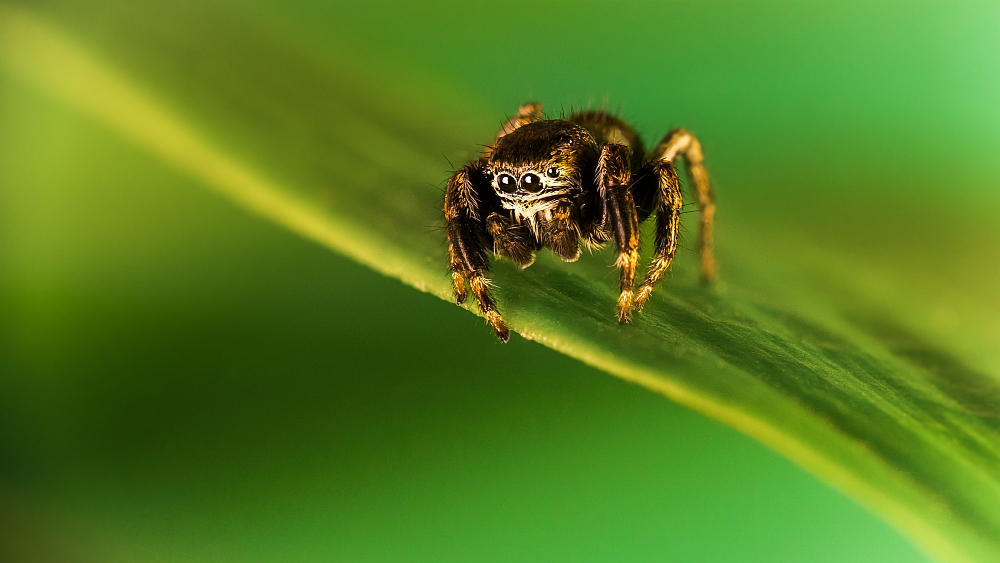 Tiny spider by Lasiu7