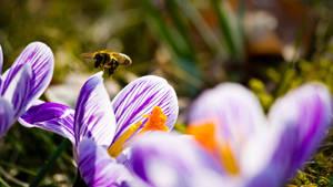 Bee in work by Lasiu7