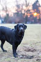 Black Dog by Lasiu7