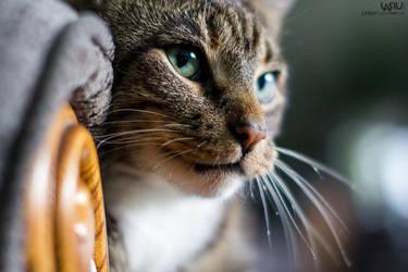 Cat face by Lasiu7
